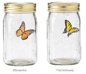 Motyl w słoiku monarcha i paź królowej